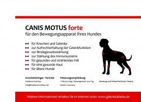 Foto 4 Canis Motus forte, das Original – Die Gelenktablette für den Hund der neusten Generation.