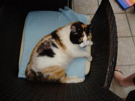 Cats Sitter und Igelfamilie Fütterer