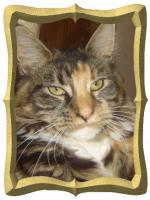 Catsitting - Katzenbetreuung, so individuell wie Ihr Liebling