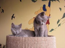 Foto 3 Chartreux-Kartäuser