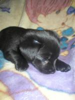 Foto 4 Chihuahua-Mix