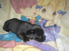 Foto 5 Chihuahua-Mix