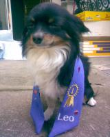 Foto 2 Chihuahua deckrüdengemeinschaft