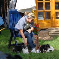 Foto 4 Chihuahuawelpen mit Pap.