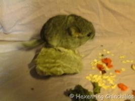Foto 3 Chinchillas Babys suchen ein neues zu Hause