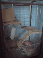 Chinchillas mit großem Käfig und Zubehör kostenlos abzugeben