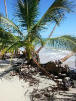 Foto 13 Costa Rica - Pura Vida - Mar Verde Lodge