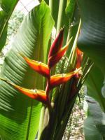 Foto 19 Costa Rica - Pura Vida - Mar Verde Lodge