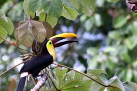 Foto 22 Costa Rica - Pura Vida - Mar Verde Lodge