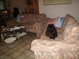 Foto 3 Couchganitur von Cor