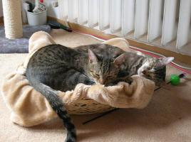 DRINGEND-Rocky und Lilly suchen ein zu Hause