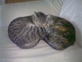 Foto 4 DRINGEND-Rocky und Lilly suchen ein zu Hause