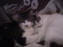 DRINGEND - 2 Katzen suchen ein neues Zuhause