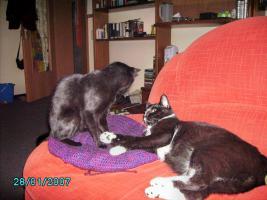 DRINGEND - 3 Katzen suchen neues zu Hause