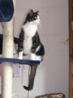 Foto 2 DRINGEND - 3 Katzen suchen neues zu Hause