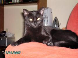 Foto 3 DRINGEND - 3 Katzen suchen neues zu Hause