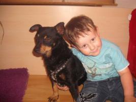 Foto 5 Dan, ein kleiner Traumhund sucht seine Traumfamilie