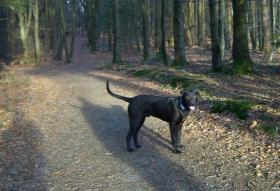 Foto 3 Dany 8 Mon. Labby-Doggen-Boxer Mix sucht ein Zuhause