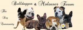 Das Bulldoggen  & Molosser Board sucht Verstärkung!!