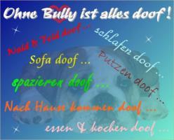 Foto 2 Das Bulldoggen  & Molosser Board sucht Verstärkung!!