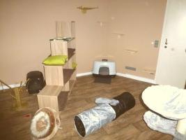Foto 3 Das Katzenhotel Bonn hat noch wenige Plätze frei!!