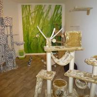 Foto 4 Das Katzenhotel Bonn hat noch wenige Plätze frei!!