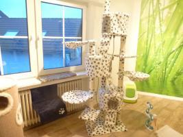 Foto 7 Das Katzenhotel Bonn hat noch wenige Plätze frei!!