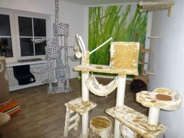 Foto 8 Das Katzenhotel Bonn hat noch wenige Plätze frei!!