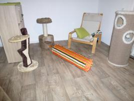 Foto 9 Das Katzenhotel Bonn hat noch wenige Plätze frei!!