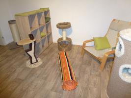Foto 10 Das Katzenhotel Bonn hat noch wenige Plätze frei!!