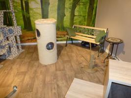 Foto 11 Das Katzenhotel Bonn hat noch wenige Plätze frei!!