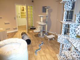 Foto 12 Das Katzenhotel Bonn hat noch wenige Plätze frei!!