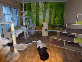 Foto 2 Das Katzenhotel Bonn hat noch wenige Plätze frei!!