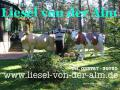 Deko Kuh lebensgross inkl. Deko Kälbchen - www.dekomitpfiff.de