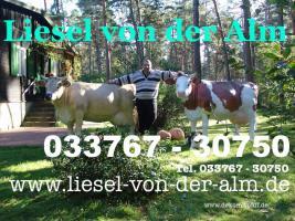 Deko Kuh lebensgross - Liesel von der Alm - www.liesel-von-der-alm.de - Tel. 033767 - 30750