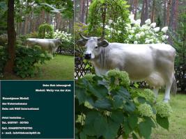 Deko kuh als Schaufensterwerbung … www.dekomitpfiff.de