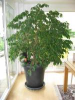 Dekoration-pflanze