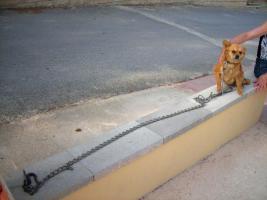 Foto 3 Dena, ein 30cm kleiner Kettenhund