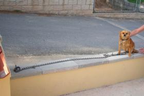Foto 4 Dena, ein 30cm kleiner Kettenhund