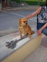 Foto 5 Dena, ein 30cm kleiner Kettenhund