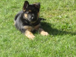 Der Kauf eines Hundes ist die einzige M�glichkeit, bei der man sich f�r Geld WAHRE LIEBE und TREUE kaufen kann