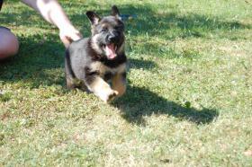Foto 2 Der Kauf eines Hundes ist die einzige M�glichkeit, bei der man sich f�r Geld WAHRE LIEBE und TREUE kaufen kann