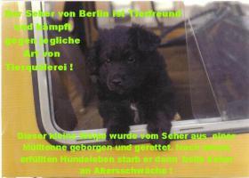 Foto 2 Der Seher von Berlin sucht...