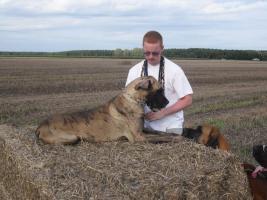 Foto 3 Deutsche Dogge