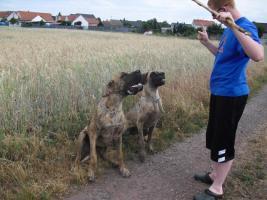 Foto 6 Deutsche Dogge