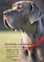 Foto 4 Deutsche Dogge Blaue Welpen mit Papiere