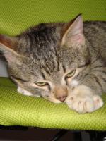 Foto 4 Die kleine Rosa sucht ein Zuhause