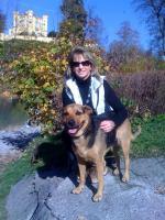 Die mobile Hundeschule / Mobiler Hundetrainer (AÖ, MÜ, PAN, Braunau & Umgebung)