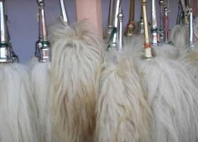 Foto 6 Die vergoldeten Ornamente für Elefanten und handgemachte bunte dekorative Schirme aus Indien.