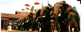 Die vergoldeten Ornamente für Elefanten und handgemachte bunte dekorative Schirme aus Indien.